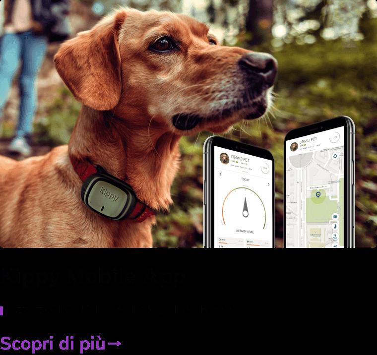 kippy Quanto costa un'app - ecco il preventivo di WWG